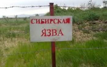 Тұрғындардың Сібір жарасын қалай жұқтырғаны белгілі болды