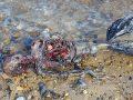 Жағаға шығып қалған су перісінің қаңқасы көпшілікті шошытты (фото, видео)