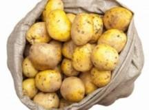 Павлодарда рекордтық көлемдегі картоп экспортқа шығарылғаны туралы мәлімет жалған